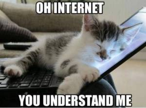 144168-cats-internet