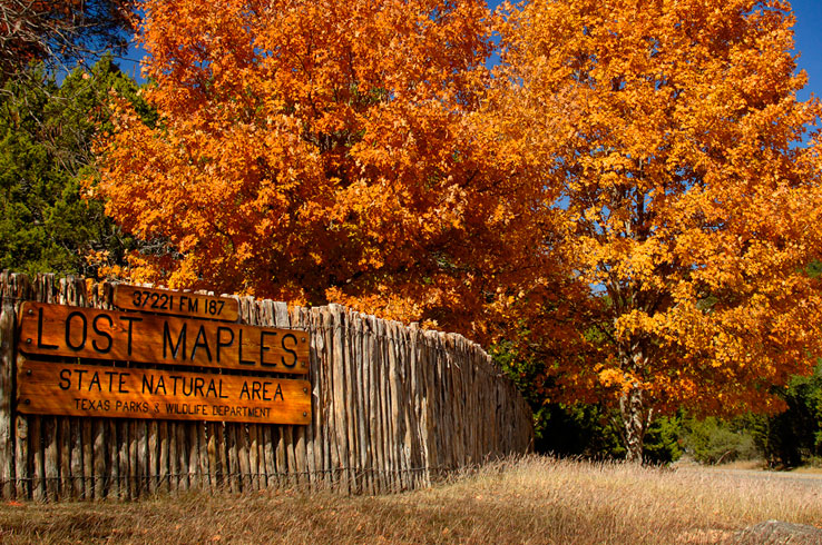 fall-foliage-lost-maples-state-park